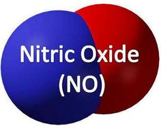 Nitric Oxide​